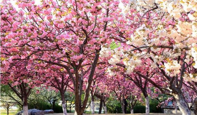 日本东京春天下午
