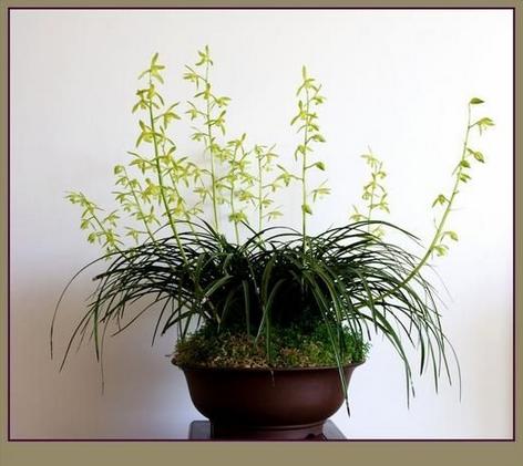 植物边框简约大方