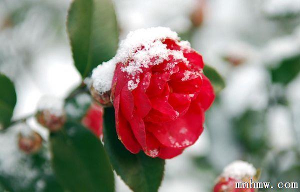 冬季花卉病虫害防治方法
